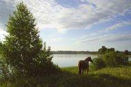<p>На берегу озера можно местные жители иногда привязываютлошадей.</p>